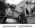 black and white close up of two ... | Shutterstock . vector #1169340952