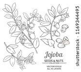 jojoba plant vector   Shutterstock .eps vector #1169344495