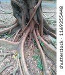 tree root in the park   Shutterstock . vector #1169355448