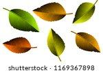 autumn yellow leaves | Shutterstock .eps vector #1169367898