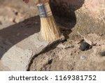 archeology female hand holds a...