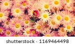 nature autumn background with... | Shutterstock . vector #1169464498