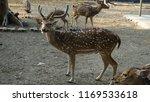 deer with beautiful antlers | Shutterstock . vector #1169533618