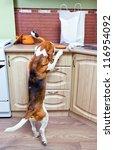 kitchen pilferers. now we know... | Shutterstock . vector #116954092