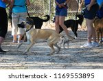 boxer cross at canine club   Shutterstock . vector #1169553895