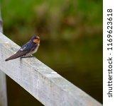 a dainty delightful  little... | Shutterstock . vector #1169623618
