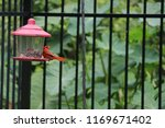 red male northern cardinal... | Shutterstock . vector #1169671402