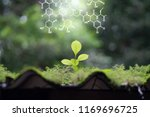 plants background with... | Shutterstock . vector #1169696725