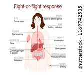 fight or flight response is a... | Shutterstock .eps vector #1169742535