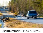 reindeers almost causing a... | Shutterstock . vector #1169778898