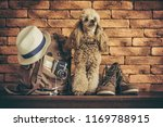 backpack with dog. concept of... | Shutterstock . vector #1169788915