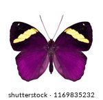 Stock photo beautiful fancy purple butterfly isolated on white background fascinated creature 1169835232