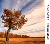 Lone Tree With An Autumn Sky