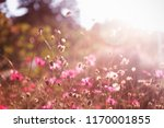beautiful pink flowers in soft... | Shutterstock . vector #1170001855