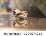 Small photo of Sparrows at the city fountain. Birds are wet. Sparrows in nature. Female and male sparrows.