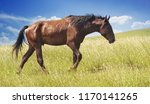 brown horse in scars and wounds ...   Shutterstock . vector #1170141265