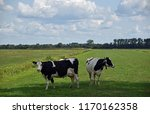 typical dutch landscape with... | Shutterstock . vector #1170162358