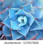 sharp pointed agave plant leaves | Shutterstock . vector #117017602