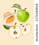 vector set of apple fruits and... | Shutterstock .eps vector #1170185818