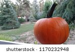 pumpkin   sitting on fence | Shutterstock . vector #1170232948