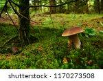 nice healthy edible autumn... | Shutterstock . vector #1170273508