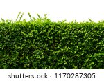 green leaves texture wall... | Shutterstock . vector #1170287305
