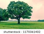 old oak on meadows. a field on... | Shutterstock . vector #1170361402
