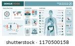 dengue virus infographic  virus ... | Shutterstock .eps vector #1170500158