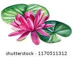 pink lotus  beautiful... | Shutterstock . vector #1170511312