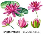 Set Of Beautiful Pink Lotuses ...