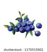 beautiful hand painted... | Shutterstock . vector #1170515002