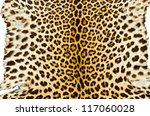 Closeup Image Of Tiger Skin For ...