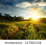 Sunset Over Rice Field. Ubud ...