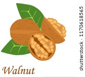 walnut  realistic walnut on a... | Shutterstock .eps vector #1170618565