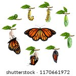 life cycle of butterfly... | Shutterstock .eps vector #1170661972