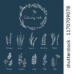 culinary herbs set | Shutterstock .eps vector #1170709078