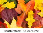 Autumn card of colored leafs over white background - stock photo