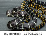 Mottled Snake With Black Yellow ...