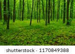 beautiful green forest in spring | Shutterstock . vector #1170849388