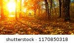 autumn trees on sun in park | Shutterstock . vector #1170850318