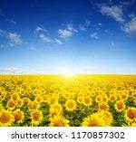 field of sunflowers and sun  | Shutterstock . vector #1170857302