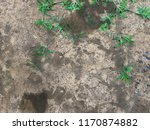 dirty black oil stain on dry... | Shutterstock . vector #1170874882