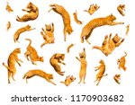 Stock photo many ginger flying and jumping funny cats isolated on a white background 1170903682