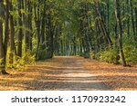 the footpath among trees in... | Shutterstock . vector #1170923242