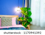 fiddle leaf fig tree in the... | Shutterstock . vector #1170941392