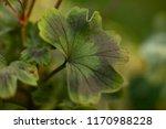green leaf on green background. ... | Shutterstock . vector #1170988228