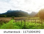 dry corn fields awaiting... | Shutterstock . vector #1171004392