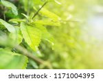view green leafy plants  beauty ... | Shutterstock . vector #1171004395