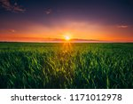 colorful sky in sunset dawn... | Shutterstock . vector #1171012978