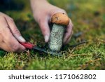 the search for mushrooms in the ...   Shutterstock . vector #1171062802